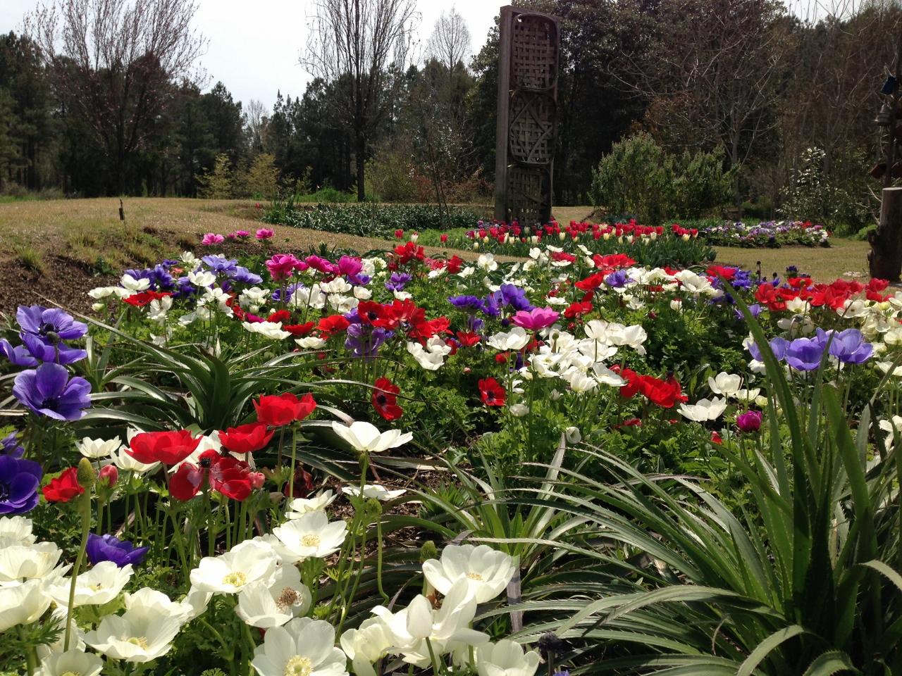 Cut Flower Garden Moore Farms Botanical Garden