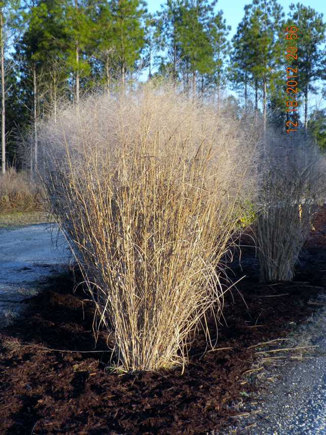 Grasses For The Winter – Moore Farms Botanical Garden Purple Happy Holidays Pictures