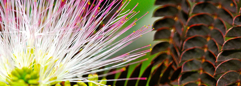 http://www.moorefarmsbg.org/wp-content/uploads/2012/12/mimosa-homebannerphoo.jpg