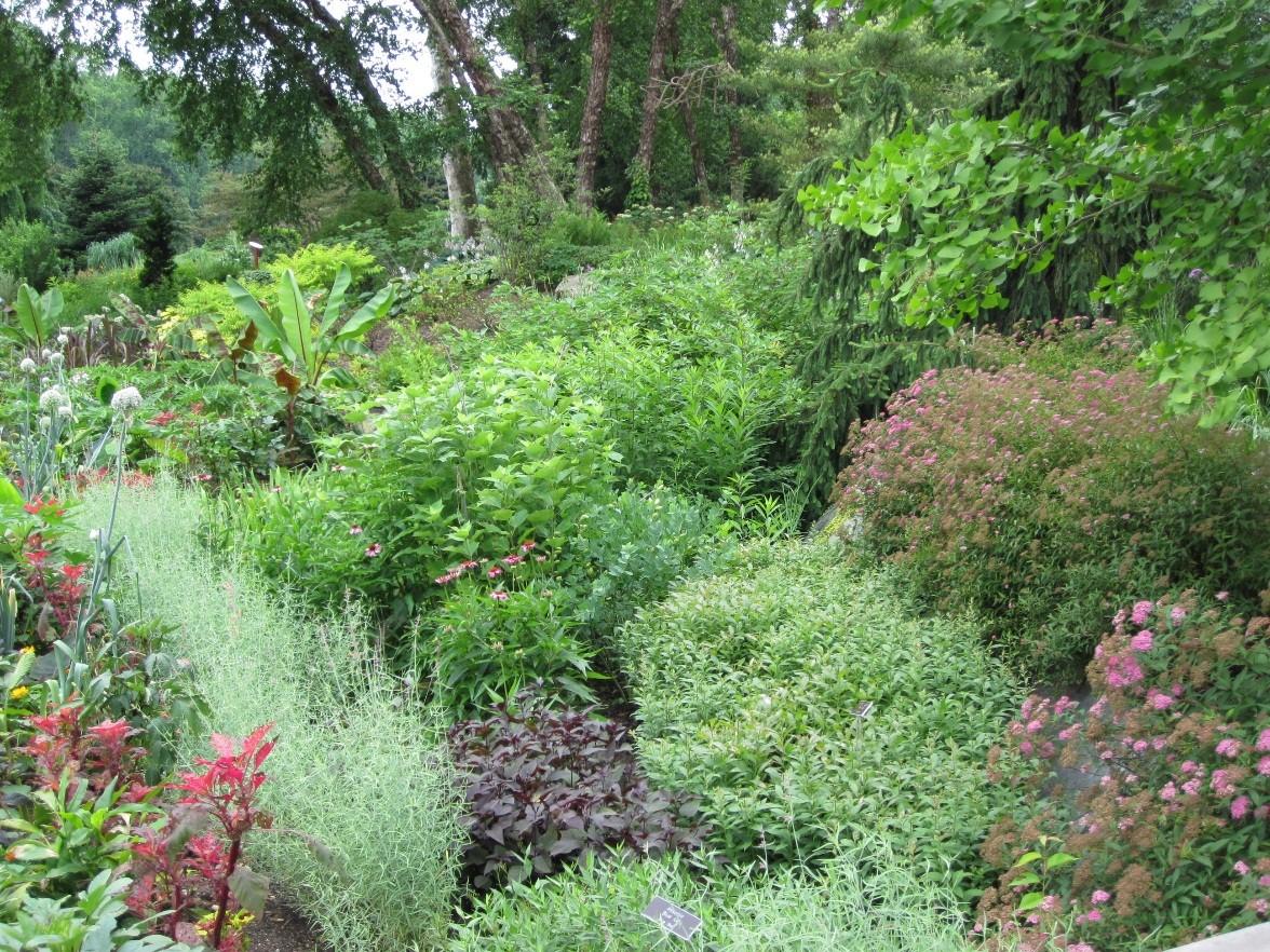 Rain Garden Picture