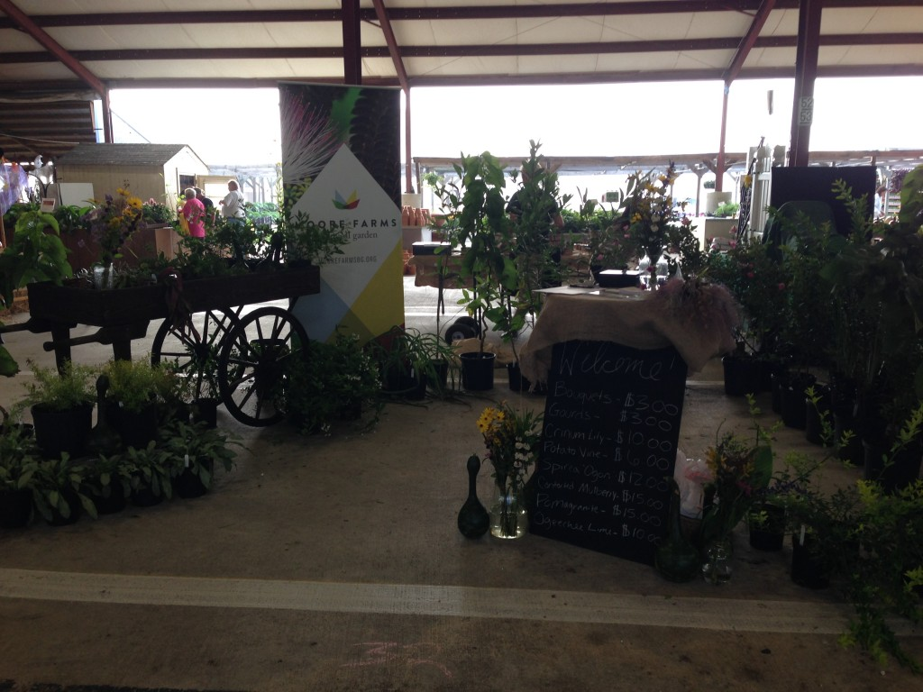 Pee Dee Fall Plant and Flower Festival – Moore Farms ...