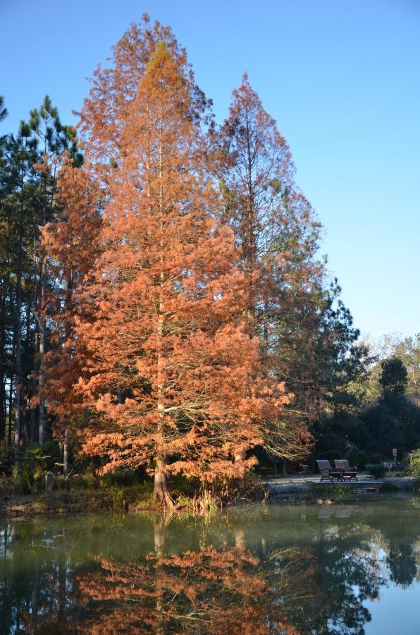 Changing Seasons Moore Farms Botanical Garden