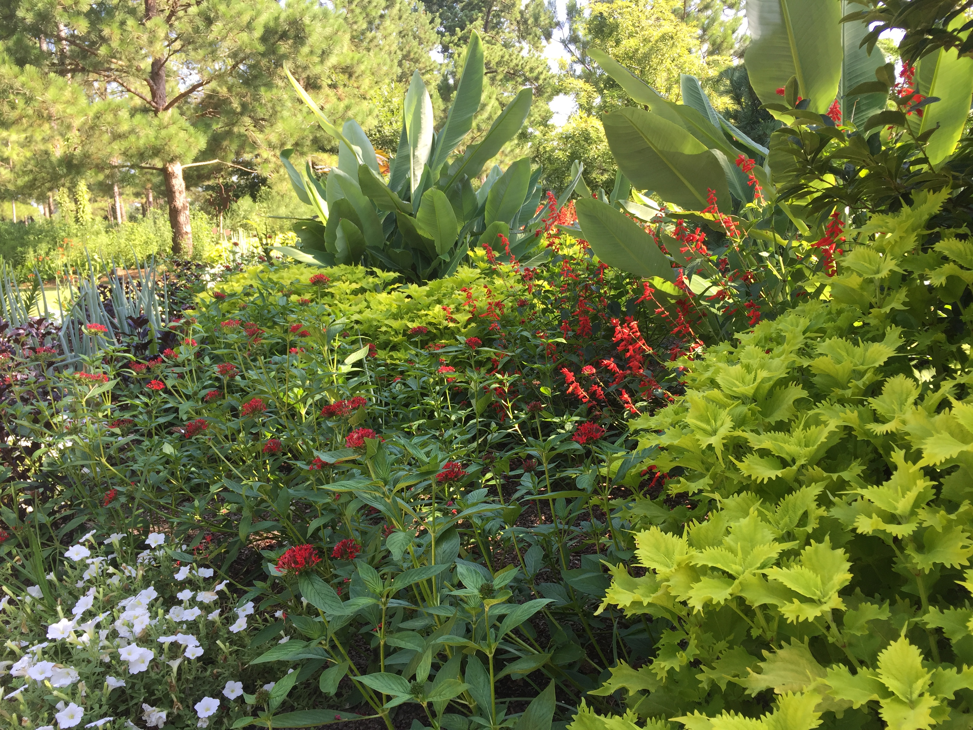 Plant Combinations Managing Color In The Garden Moore Farms Botanical Garden
