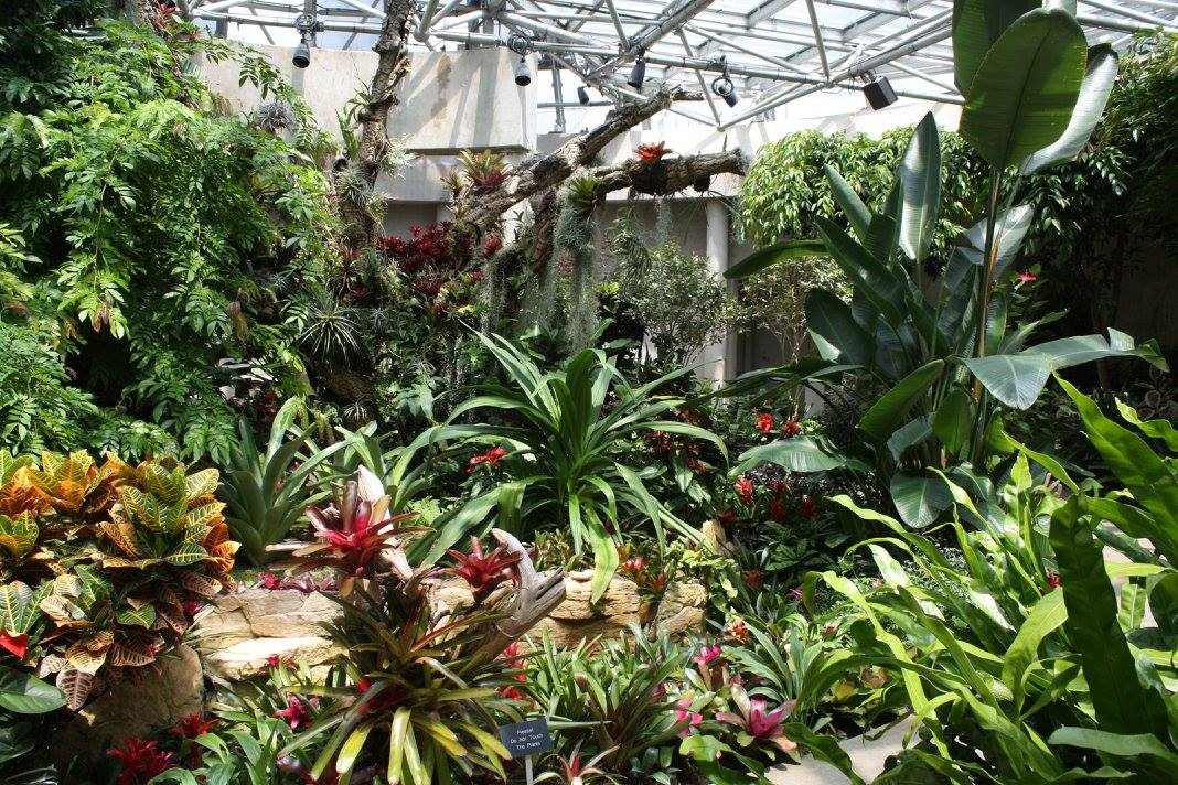 Bringing Bromeliads Indoors Moore Farms Botanical Garden