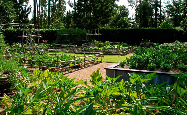 A Day in the Veggie Patch – Moore Farms Botanical Garden