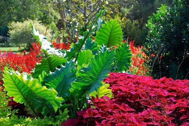 art-of-gardening