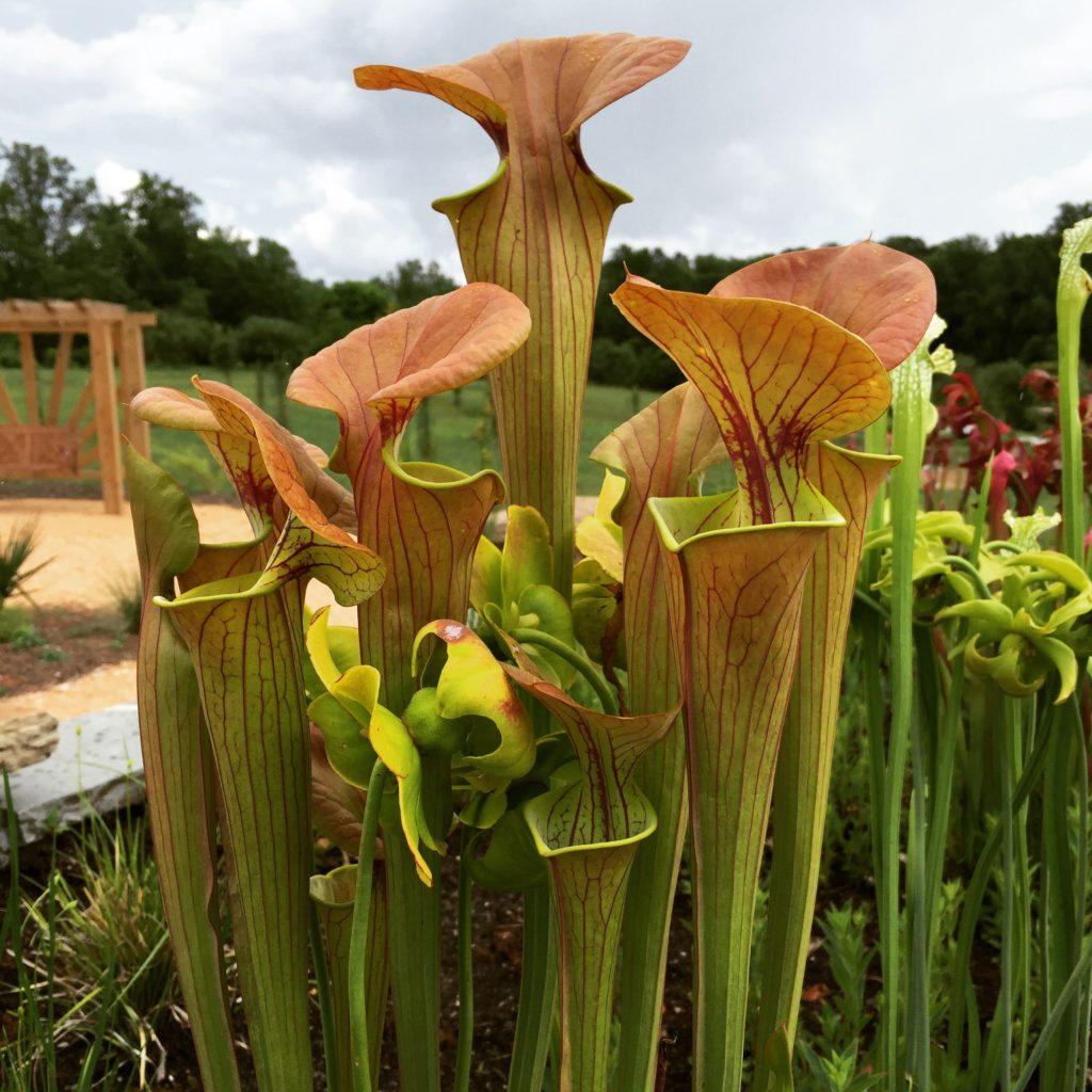 DIY Plant Bogs – Moore Farms Botanical Garden