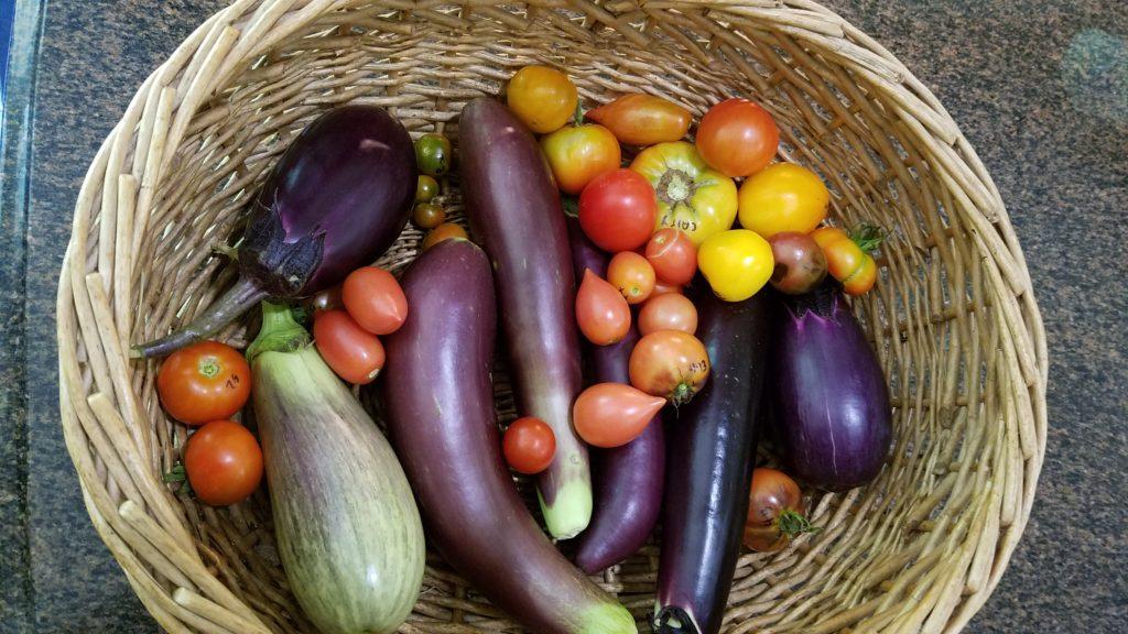 Contain Your Veggies Moore Farms Botanical Garden